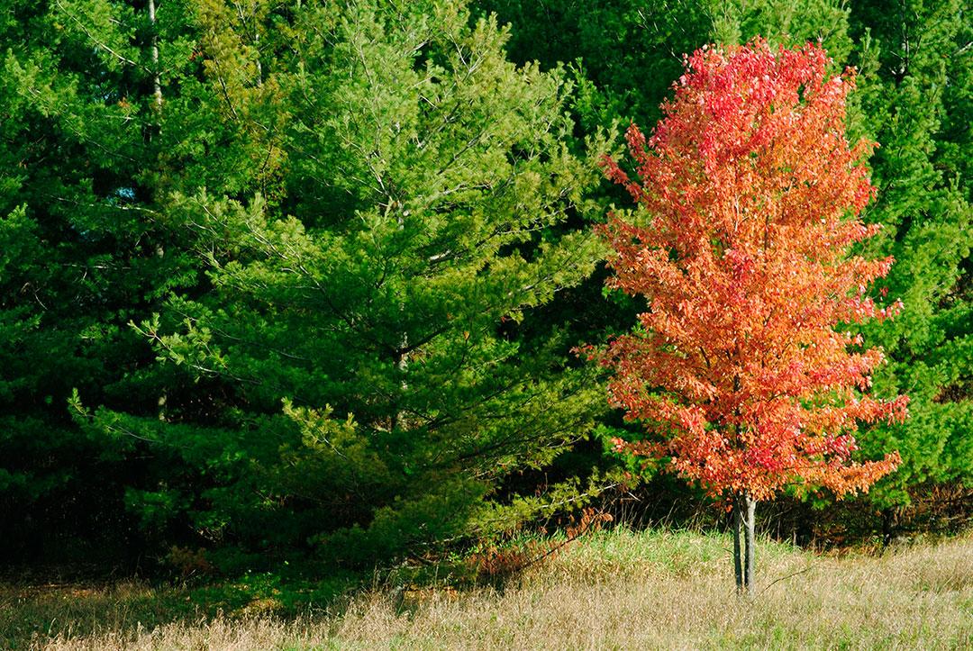 Bio-contrôle Arboricoles – Montréal, Gatineau, Outaouais