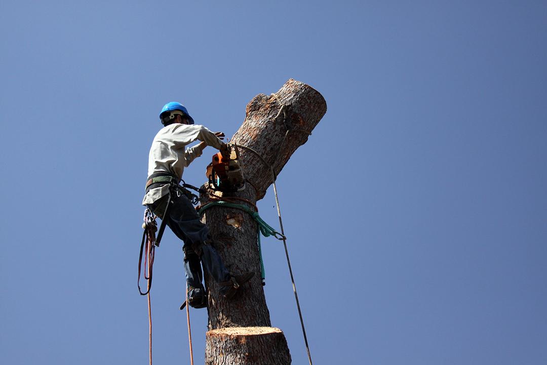 Élagueur, travail risqué – Tree trimmer dangerous jobs