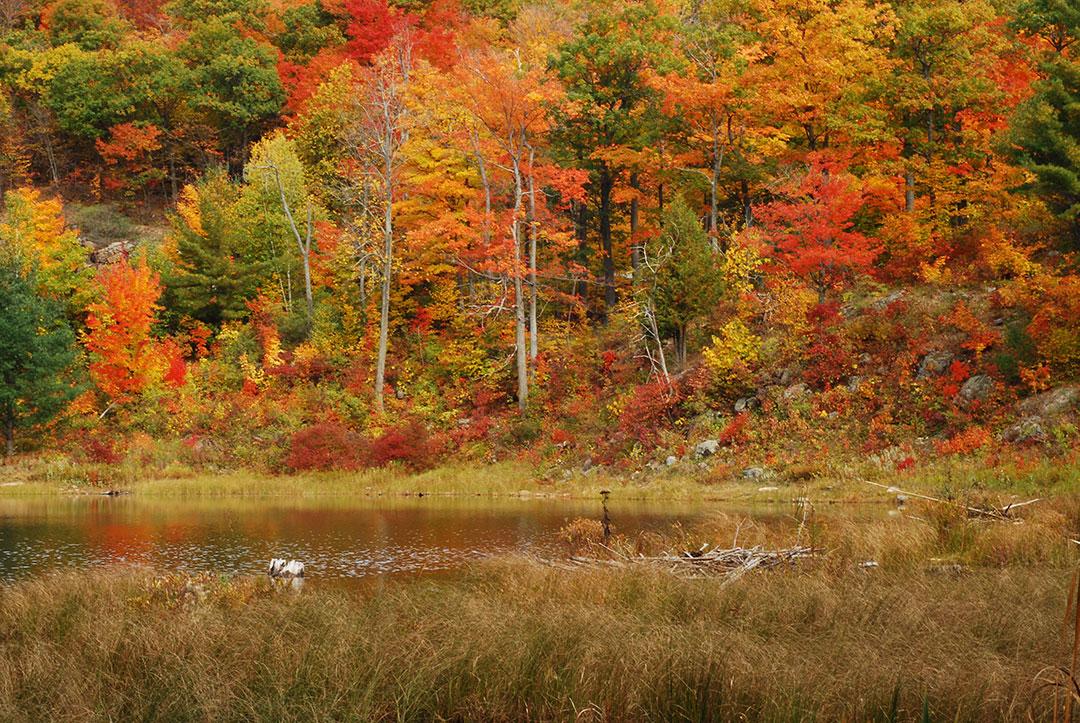 Bio-contrôle Arboricoles – Montréal, Gatineau, Outaouais. Photo : René Hardy