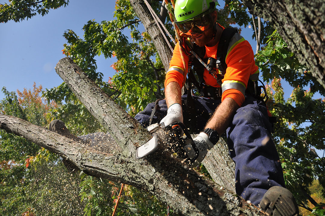 Bio-contrôle Arboricoles – Montreal, Gatineau, Outaouais. Tree felling, pruning, trimming.